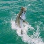 Tarpon fishing with orlando charter client