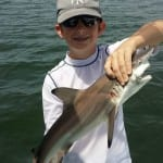 Tampa fishing Chartes for Sharks